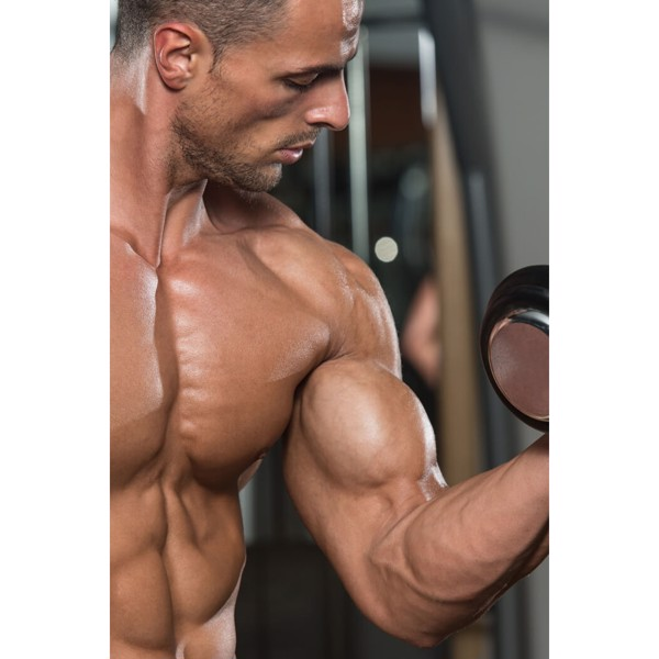 Image of Den store Biceps guide (sendes digitalt)
