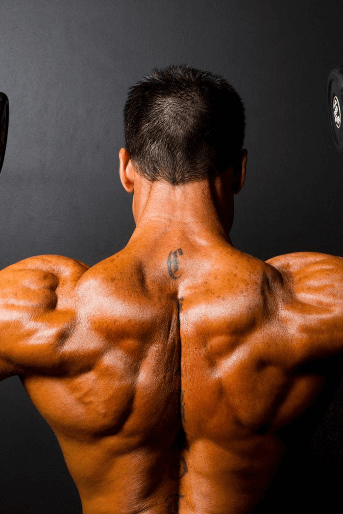 bedste træningsprogram til større muskler