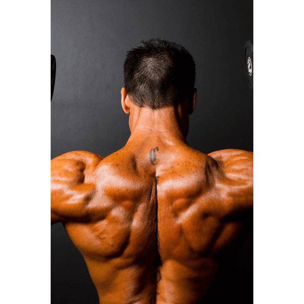 Billede af Fullbody træningsprogram for større og stærkere muskler (sendes digitalt)
