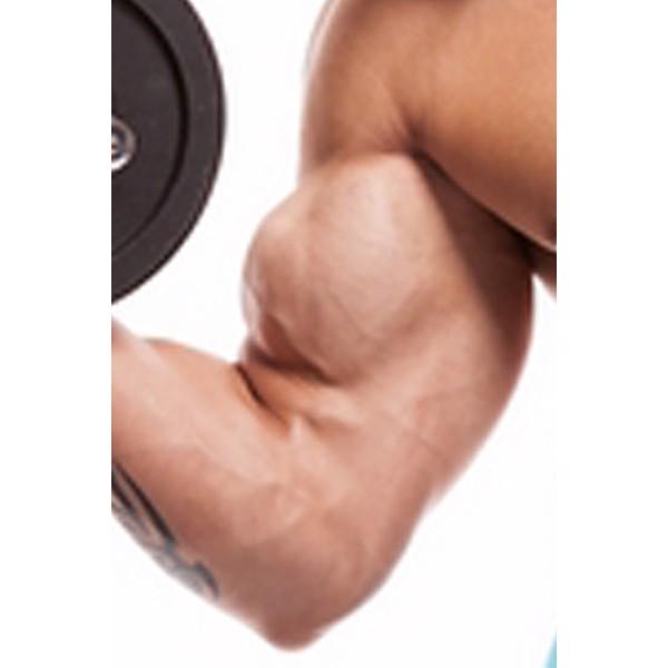 Billede af Gode råd til større biceps (sendes digitalt)