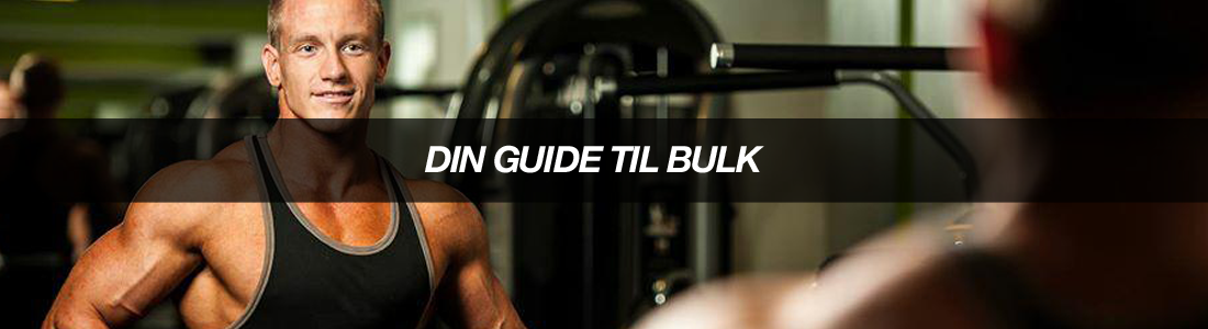 article-DINGUIDETILBULK.png-bodyman